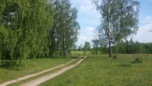 Красный Мост Клинцовский район Березы