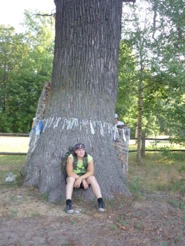 Дуб Мизиричи старое дерево