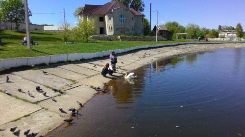 Озеро в Новозыбкове Лебеди