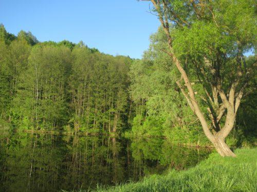 озеро окруженное лесом