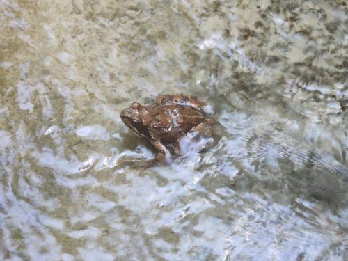Лягушка в ледяной воде