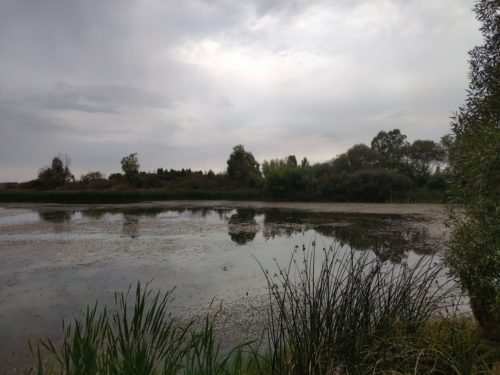 Брянкустичи озеро