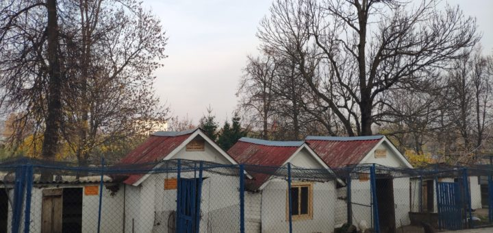 мини зоопарк Новозыбков