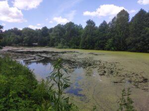 Озеро Логоватое