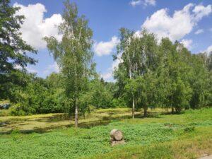 Озеро Логоватое Стародубский район