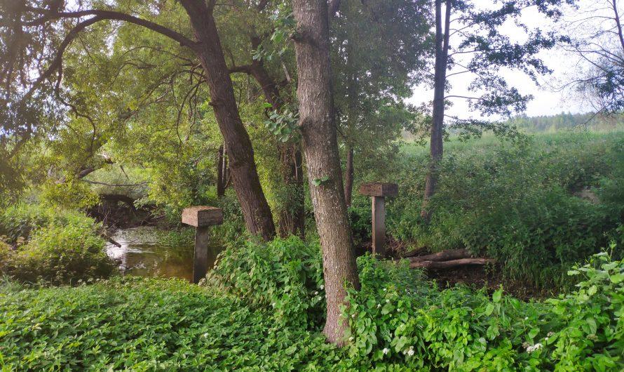 Место «Кладки» у берега реки Туросна. Рожны.